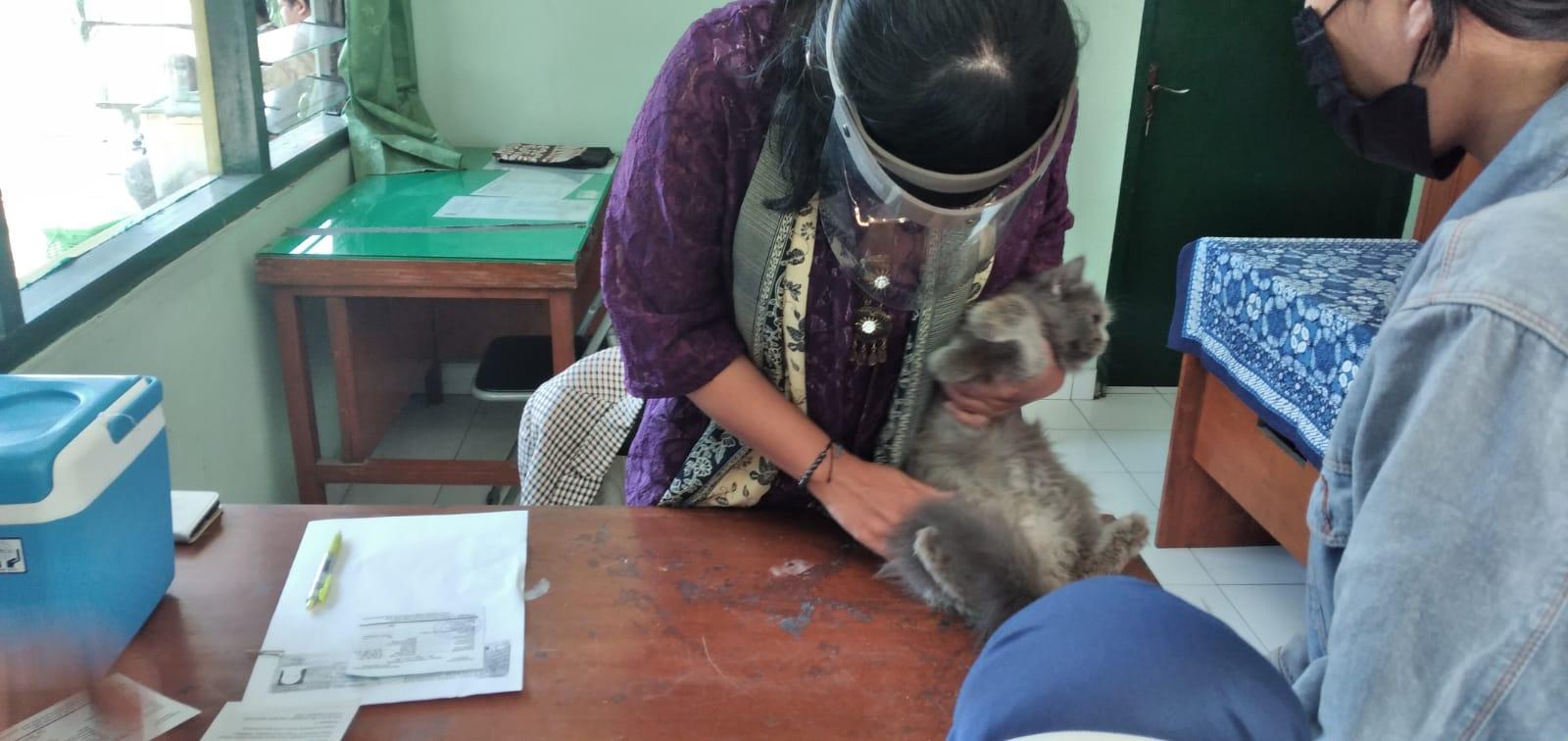 Kegiatan Vaksinasi Rabies Gratis Di Wilayah Kelurahan Notoprajan